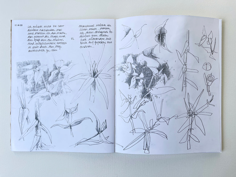 Sketchbook page exploring the shape of f paper spurge in pencil